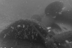 174 Schiffsschraube eines Townwrecks 12. Juli 2015