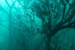 20150627-8 Unterwasserwald 27. Juni 2015
